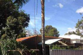 Cocos Palm Removal