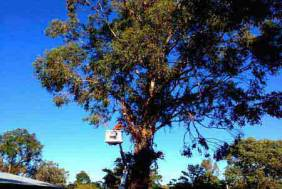Tree Removal, Banjup, Perth