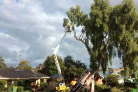 Tree Removal Bicton 6157